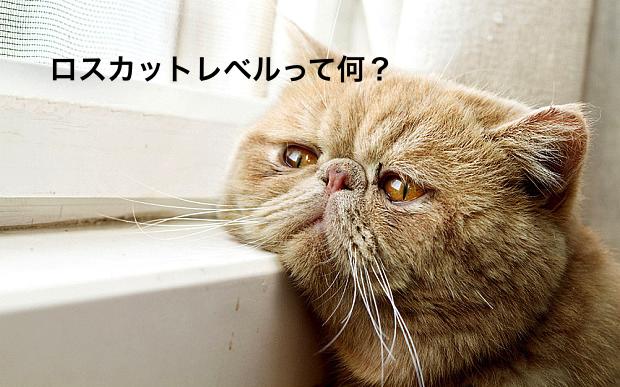 cat1123.jpg